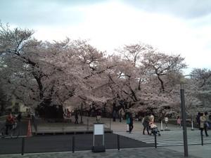 Sakura1103