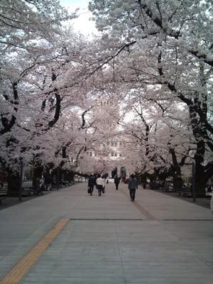 Sakura1104