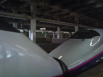 Akita02